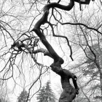 Vivant Mystic Forrest decoration